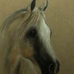 portret zwierząt - koń, suche pastele